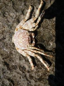 a dried out crab shell